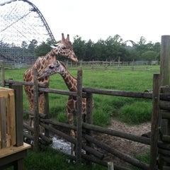 Photo taken at Wild Adventures Theme Park by Devon G. on 7/9/2013