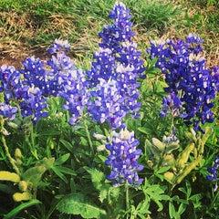 Photo taken at Nolanville, TX by Helen M. on 4/23/2014