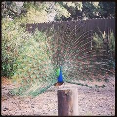 Photo taken at Irvine Regional Park by James G. on 7/9/2013