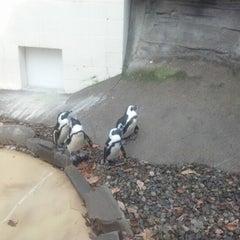 Photo taken at Binghamton Zoo at Ross Park by John E. on 11/23/2012