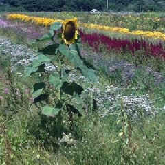 Photo taken at Bartlett's Farm by Commuter D. on 8/24/2014
