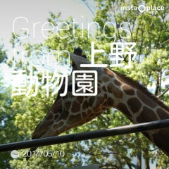 Photo taken at 上野動物園 キリン舎 by Ume Onigiri on 5/10/2014