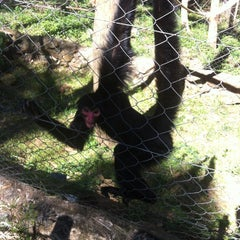 Photo taken at Gramado Zoo by Matheus C. on 3/30/2013