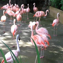 Photo taken at Zoo Atlanta by Becca T. on 5/7/2013