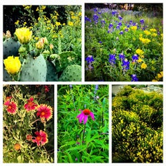 Photo taken at Lady Bird Johnson Wildflower Center by Brooke M. on 5/4/2013