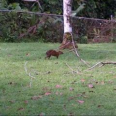 Photo taken at Gamboa Rainforest Resort by Mari B. on 12/16/2012