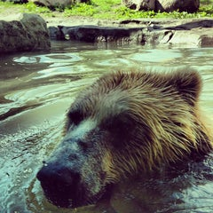 Photo taken at Minnesota Zoo by Sam D. on 6/15/2013