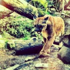 Photo taken at Oregon Zoo by Corey M. on 3/25/2013