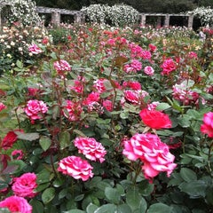 Photo taken at Raleigh Rose Garden by Shari D. on 5/8/2011