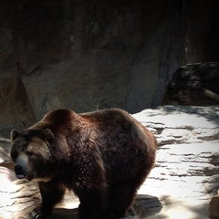 Photo taken at Denver Zoo by Roy M. on 6/9/2013