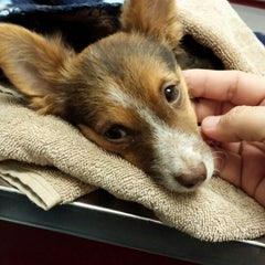 Photo taken at Animal Emergency Clinic by Bez R. on 12/17/2013