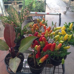 Photo taken at Floricultura Yamanaka by Lipe R. on 12/26/2014