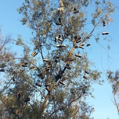 Photo taken at Morley Field Disc Golf Course by Terry M. on 12/3/2012