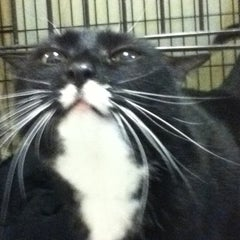 Photo taken at Monadnock Humane Society Shelter by Mary on 1/23/2014