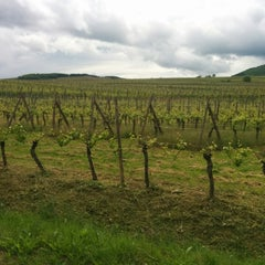 Photo taken at Pfaffenheim Vineyards by Dace B. on 5/13/2014