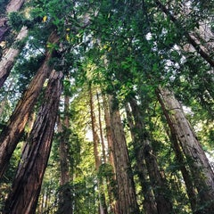 Photo taken at Muir Woods National Monument by Gleb I. on 5/17/2013