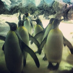 Photo taken at Sea World by Dave W. on 9/3/2012