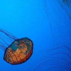 Photo taken at Steinhart Aquarium by Suzy L. on 4/26/2013