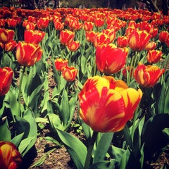 Photo taken at Sherwood Gardens by Dave F. on 4/28/2015