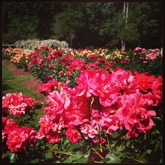 Photo taken at Raleigh Rose Garden by AJ V. on 5/26/2013