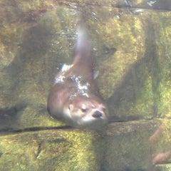 Photo taken at South Carolina Aquarium by Matt R. on 3/13/2012