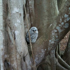 Photo taken at Marie Selby Botanical Gardens by Brett K. on 3/11/2012