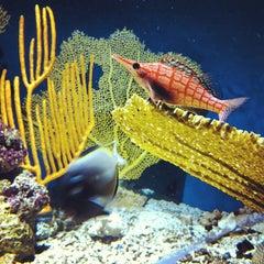 Photo taken at New England Aquarium by Rodrigo A. on 3/16/2013