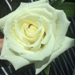 Photo taken at Chantilly Floral Boutique by Andi R. on 5/17/2014