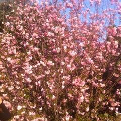 Photo taken at Johannesburg Botanical Gardens by Brendan F. on 10/14/2012