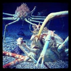 Photo taken at 海遊館 (Osaka Aquarium Kaiyūkan) by Naoerock N. on 10/19/2012