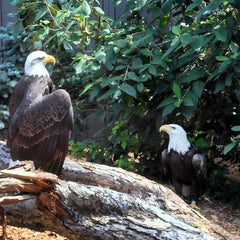 Photo taken at National Aviary by Travis W. on 7/4/2013