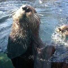 Photo taken at Monterey Bay Aquarium by Megan W. on 7/21/2013