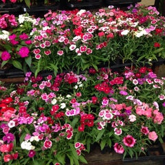Photo taken at Floricultura Yamanaka by Christiene Q. on 9/20/2015
