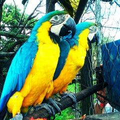 Photo taken at Zoologico Joya Grande by Carlos H. on 5/22/2014