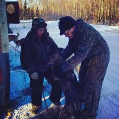 Photo taken at Iditarod Race Headquarters by Robert F. on 2/21/2014