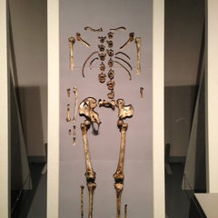 Photo taken at 沖縄県立博物館・美術館 by Meg シ. on 12/28/2012