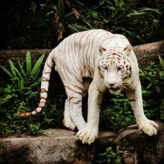 Photo taken at Singapore Zoo by Jasmine E. on 10/15/2012
