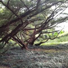 Photo taken at Melrimba Garden by Dian C. on 6/8/2015