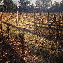 Photo taken at Vigneto Giardino by Lucia B. on 12/14/2013