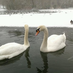 Photo taken at Abington Park Lake by Dave on 1/18/2013