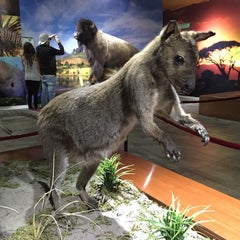 Photo taken at Museo de Historia Natural Ecatepec by David P. on 11/29/2014