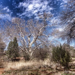 Photo taken at Coconino National Forest by Devon A. on 3/10/2014