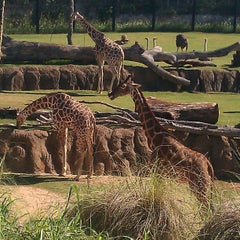 Photo taken at Dallas Zoo by Ashley Z. on 10/27/2012