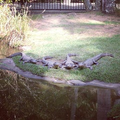 Photo taken at Australia Zoo by Betty W. on 6/8/2013