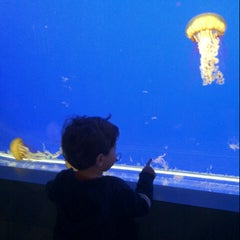 Photo taken at Shaw Ocean Discovery Center by Michelle T. on 2/11/2013