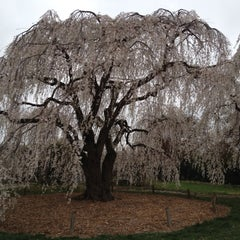 Photo taken at United States National Arboretum by Andrew T. on 3/18/2012