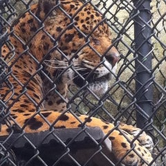 Photo taken at Elmwood Park Zoo by Andrea H. on 3/4/2012