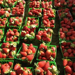 Photo taken at Sarasota Farmers Market by Kylene B. on 1/14/2012