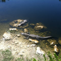 Photo taken at Big Cypress National Preserve by Marty E. on 2/22/2012