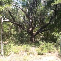 Photo taken at Jacksonville Arboretum & Gardens by Andrea C. on 4/9/2011